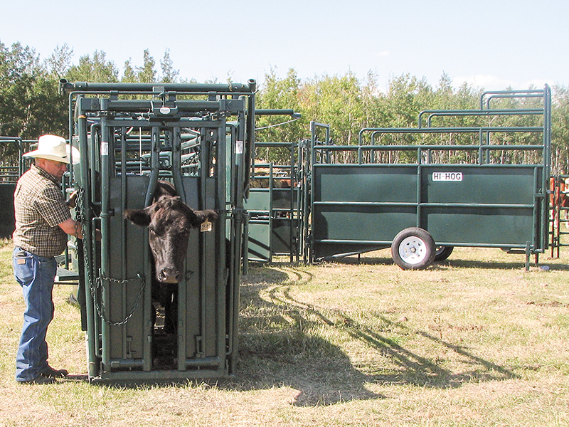Hi Hog Cattle Handling Equipment
